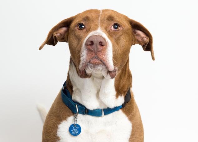 Washington's Adoptable Pets of the Week: April 3, 2015