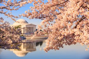Where to Eat Near the Cherry Blossoms and National Mall