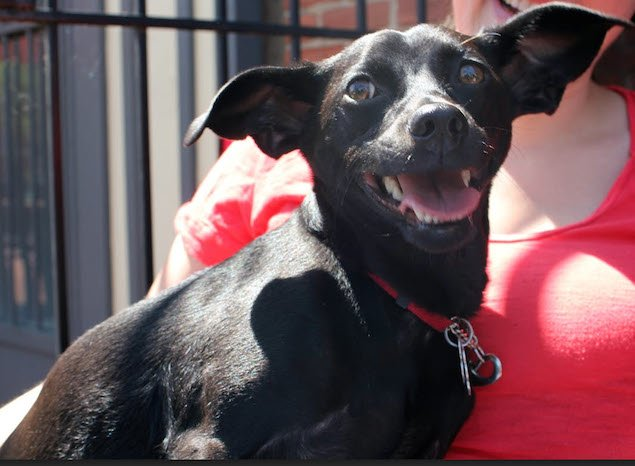 Washington's Adoptable Pets of the Week: April 24, 2015