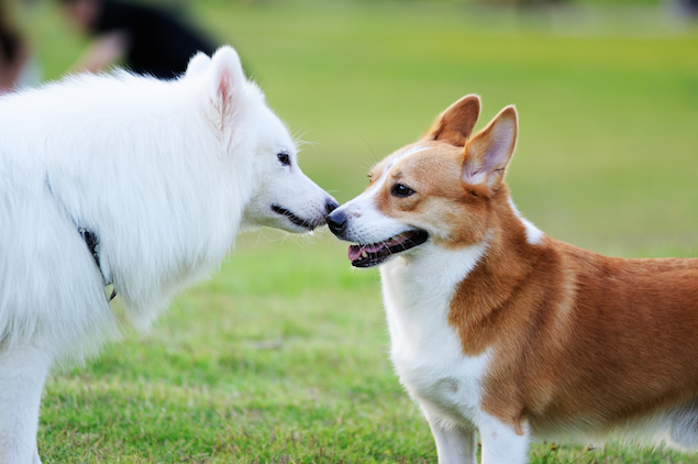 How Can We Help Our Dog Adjust to a Second Dog?