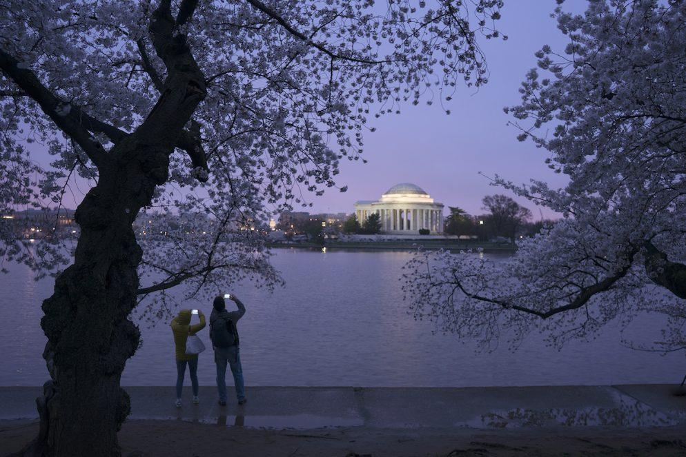 Your Terrific 2015 Cherry Blossom Instagram Photos