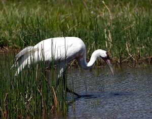 See Wetland Wildlife at Patuxent Research Refuge
