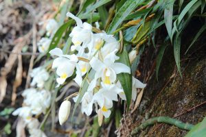 Look Out for Wild Orchids and Aquatic Animals at Rachel Carson Conservation Park