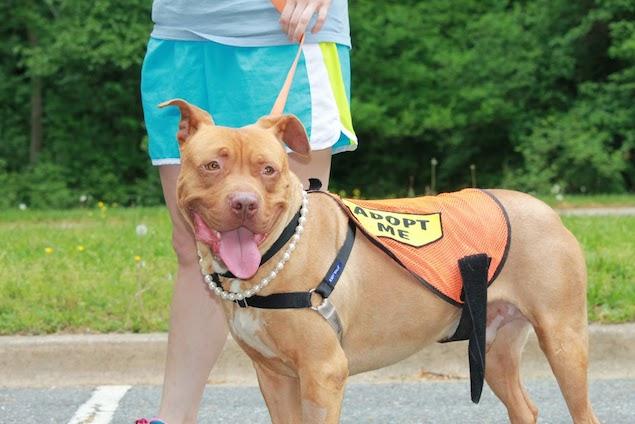 Washington's Adoptable Pets of the Week: May 22, 2015