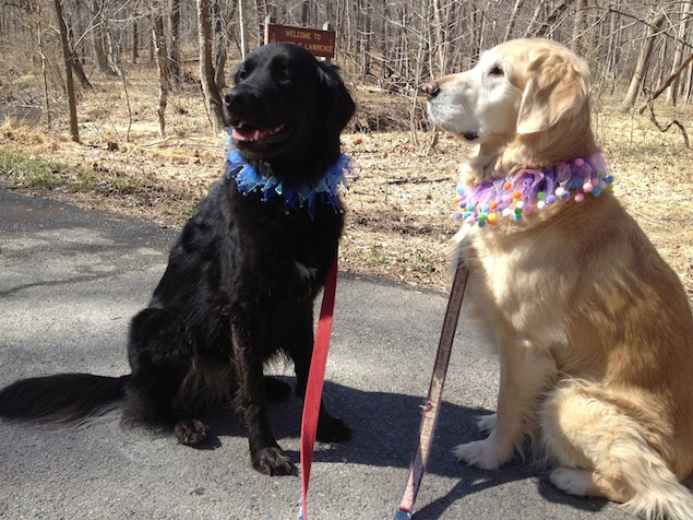 Where to Go with Your Dog this Weekend: Rocky Run Stream Valley Trail