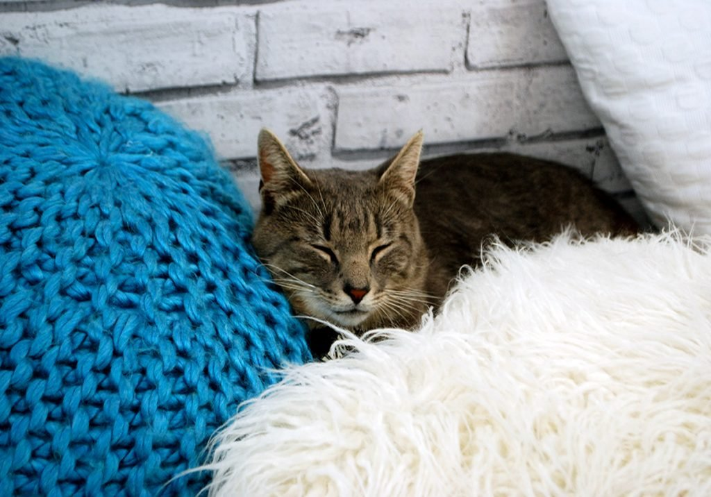Cat-9.jpg