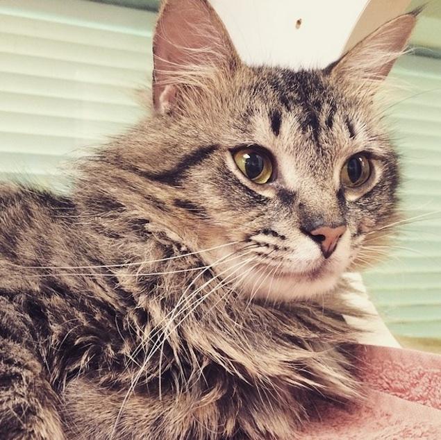 Washington's Adoptable Pets of the Week: June 5, 2015