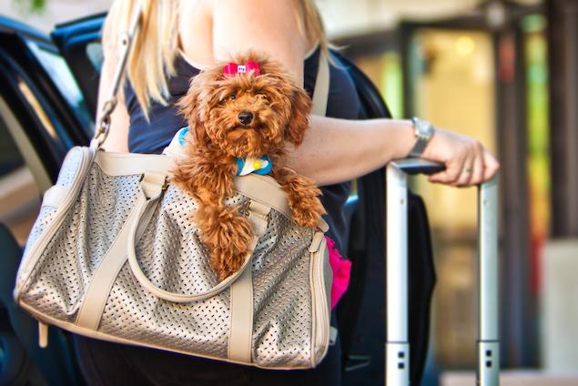 Should I Sedate My Dog on an Airplane?