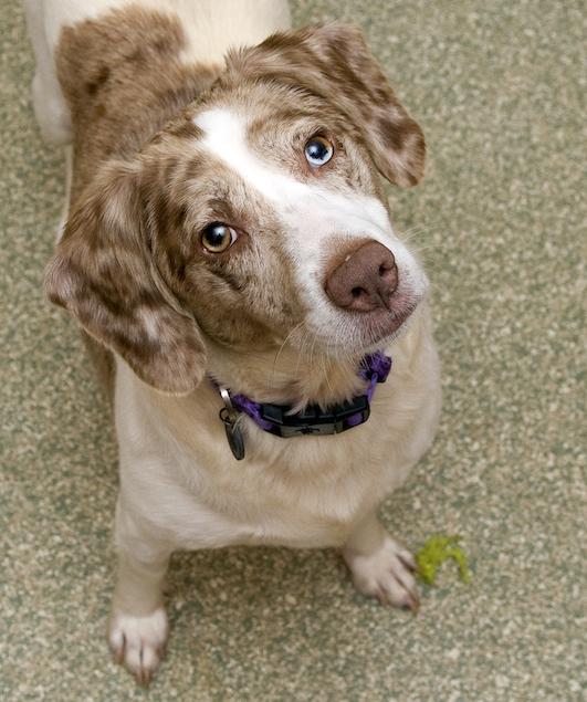 Washington's Adoptable Pets of the Week: July 17, 2015