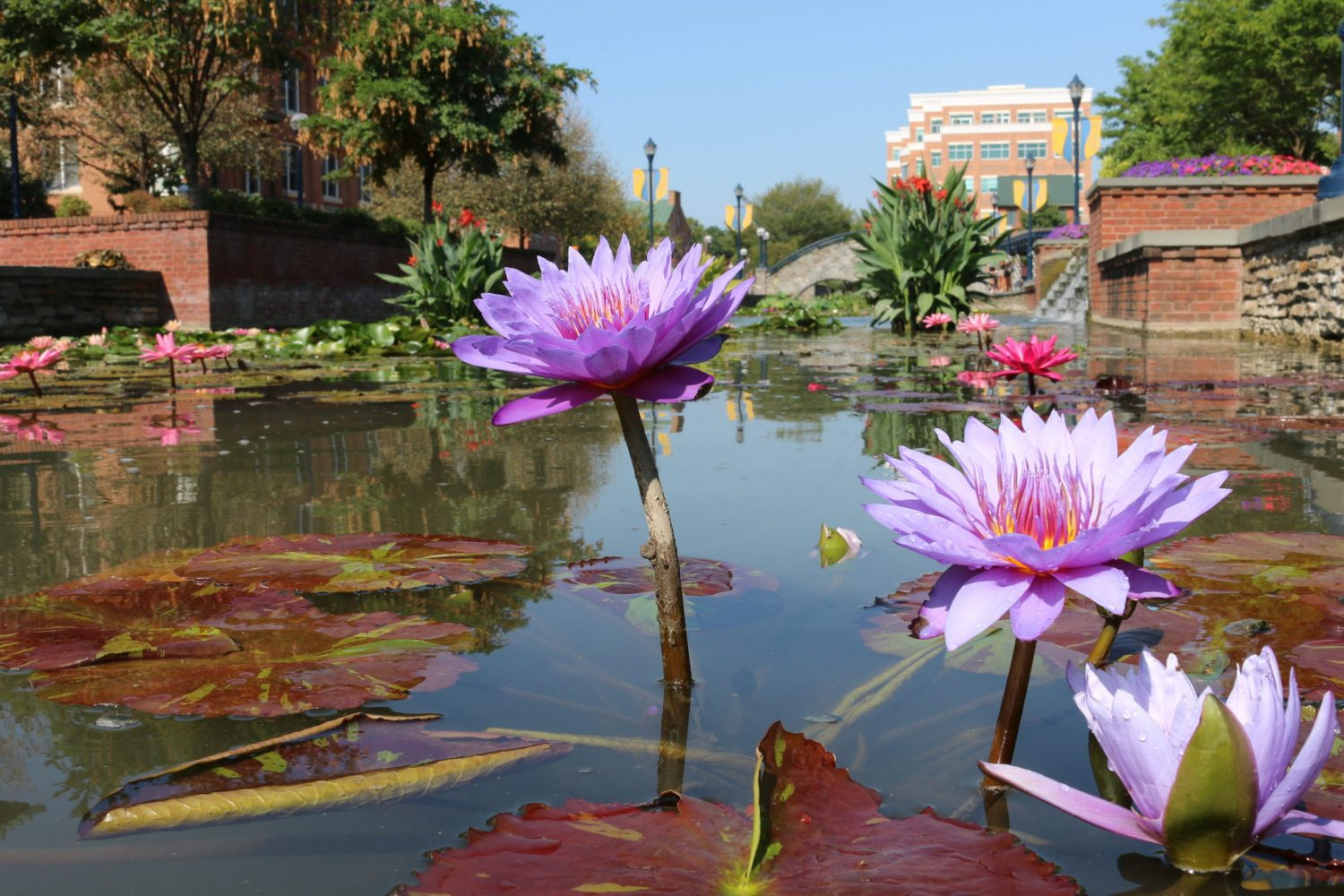 Check Out This Amazing Water Garden