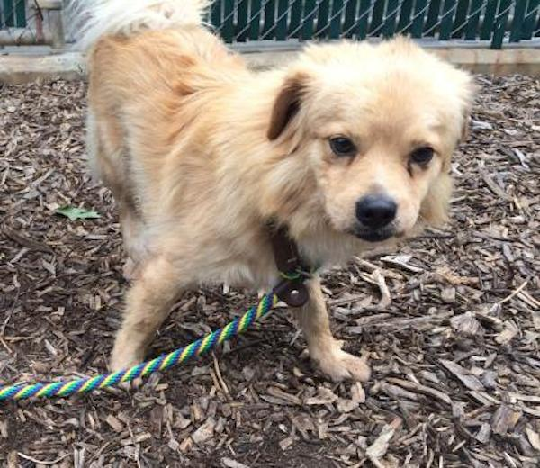 Washington's Adoptable Pets of the Week: August 7, 2015