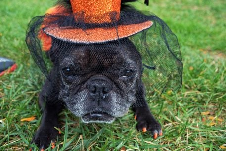 Puppies Will Wear Halloween Costumes This Weekend and You Don't Want to Miss It