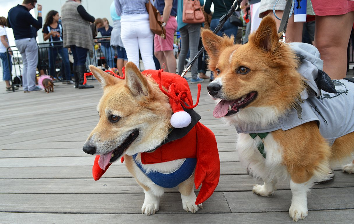 Lobster corgi and Frankenweenie.