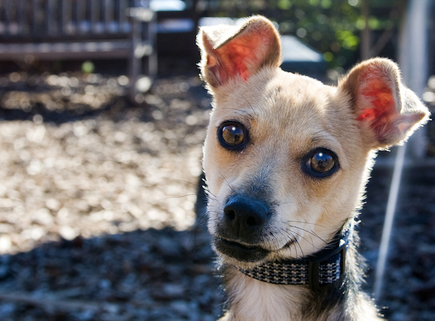 Washington's Adoptable Pets of the Week: September 18, 2015