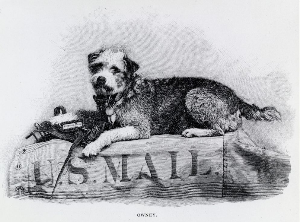 Owney the Mail Dog Still Lives, Sort of, in DC