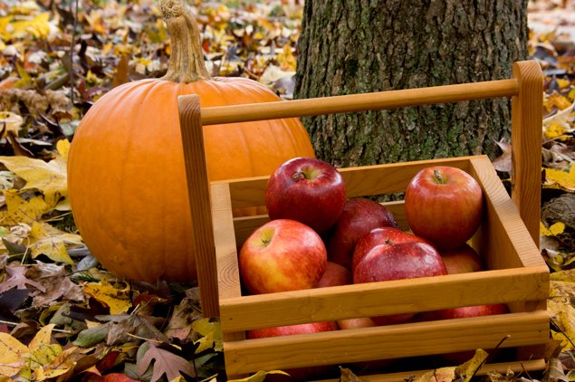 where to pick your own apples and pumpkins in washington