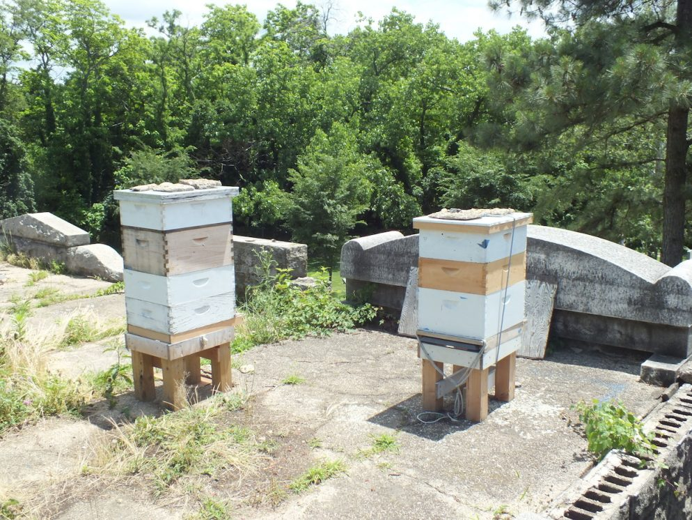 "Congressional Cemetery is Selling ""Rest in Bees"" Honey"