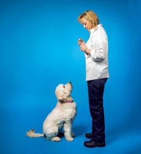 Washington, DC's Best Pet Care: Training and Behavior