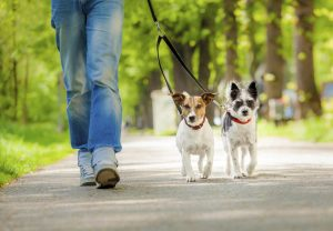 Washington, DC's Best Pet Care: Pet Sitters and Dog Walkers