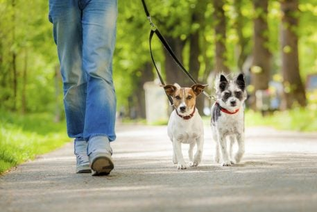 Washington, DC's Best Pet Care: Pet Sitters and Dog Walkers