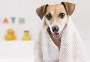 Washington, DC's Best Pet Care: Groomers