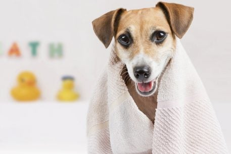 Washington, DC's Best Pet Care: Groomers