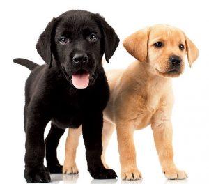 Washington, DC's Best Pet Care: Mobile Groomers