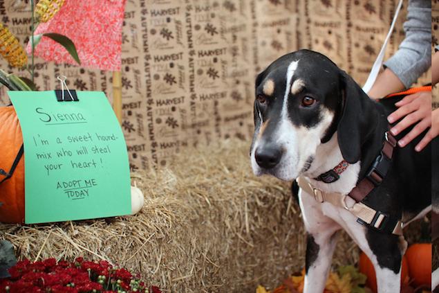 Washington's Adoptable Pets of the Week: October 9, 2015