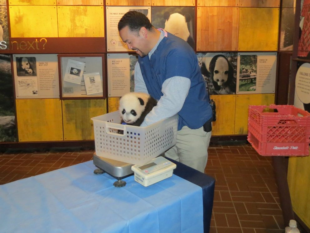 Adorable Bear to Meet Public in January