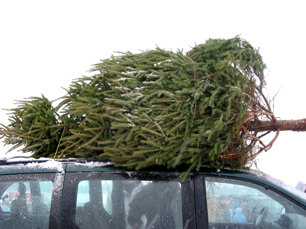 This Brilliant Service Brings You a Christmas Tree, Sets It Up, Vacuums Needles!