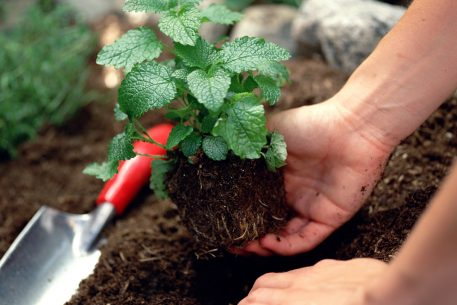 How Gardening Helped Me Cope With My Dad's Brain Cancer Diagnosis