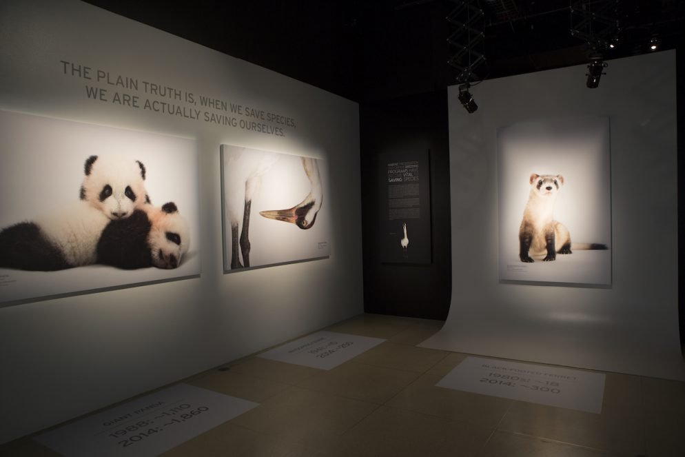 At the National Geographic Museum, See Photos of More Than 5,000 Captive Species