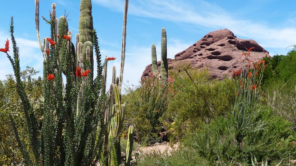 Desert flora at Phoenix's Papago Park. Photograph by Cindy McDaniel.