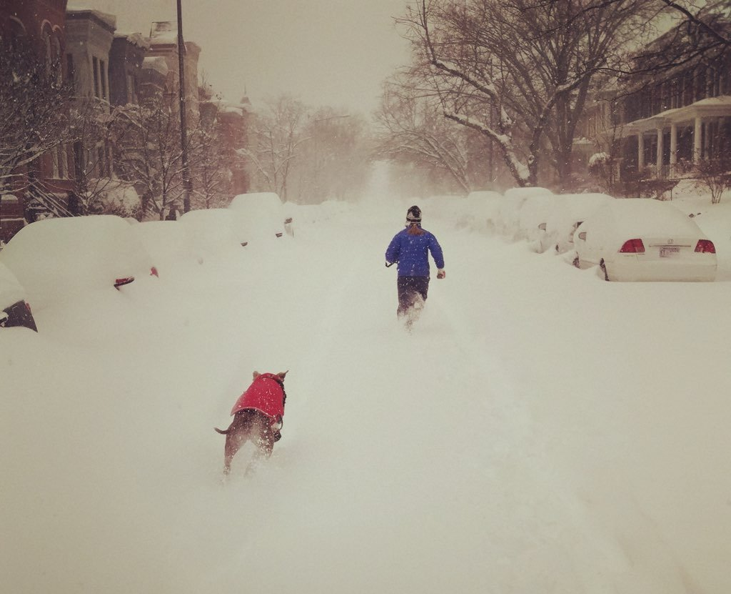 Margot and Alf running through Capitol Hill. Photo courtesy of Sam Taft.