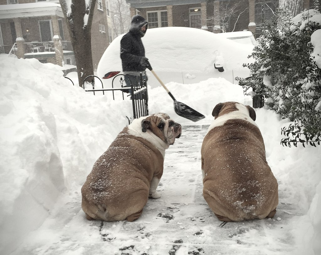 Albert and Bullet Mann performing quality control shoveling in Mount Pleasant Photo courtesy of Aurora Tice.