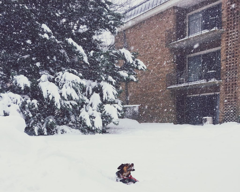 Look At These Dogs Having The Time Of Their Lives In The Snow