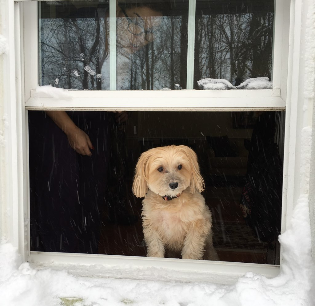 Bear just loves to watch the snow fall. Photo courtesy of Rachel Joubran.