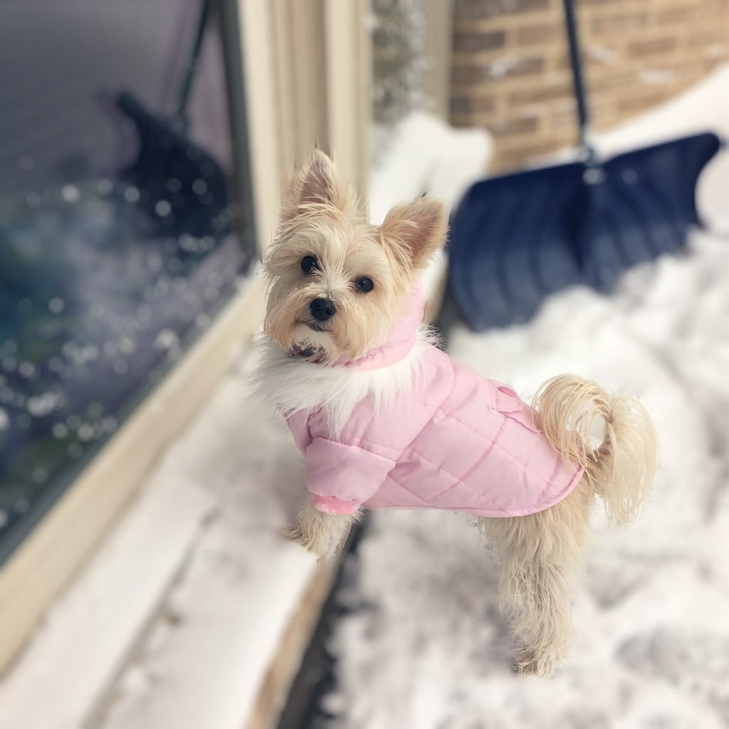 Barkley knows that you should always look your best in the snow. Photo courtesy of Danielle DiPirro.