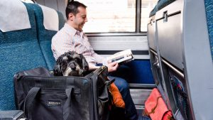 You Can Take Your Dogs (or Cats!) on Amtrak Now