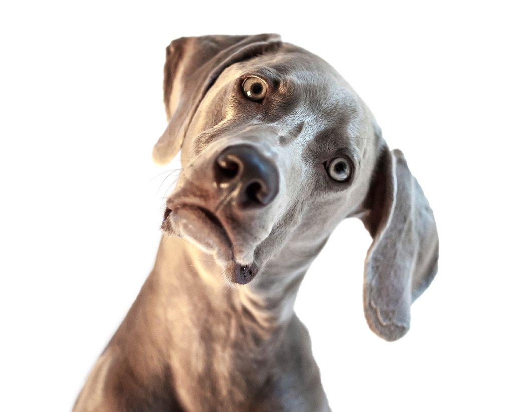 Pet etiquette at the vet. Photograph via iStock.