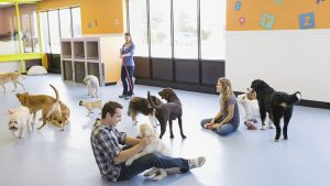 How to Find a Good Pet Sitter In DC
