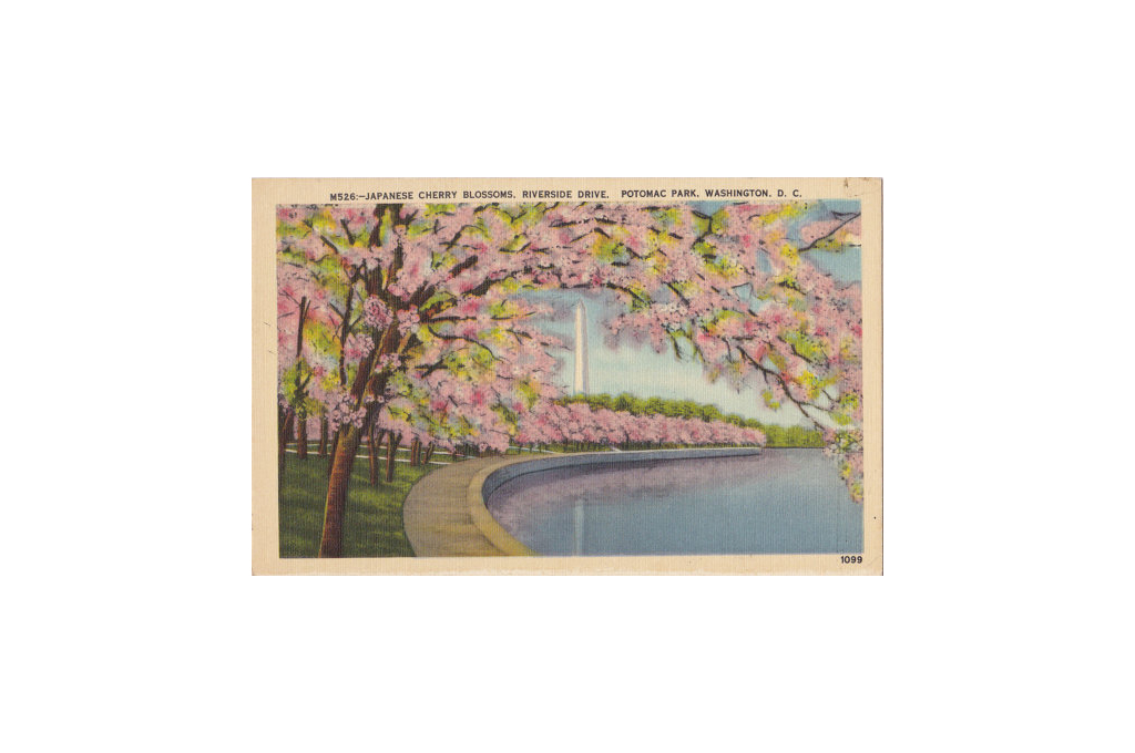 3.25.16cherry-blossom-wedding-ideas-dc-3