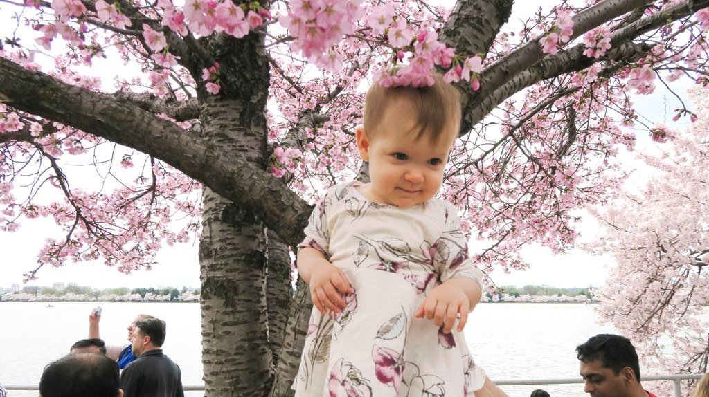 Naomi Pokidyuk is celebrating her 1-year-old birthday at the Tidal Basin.