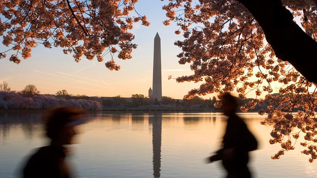 Cherry Blossom Ten-Miler