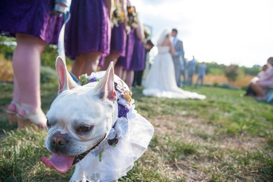 4-1-16-adorable-dogs-at-washington-weddings-11