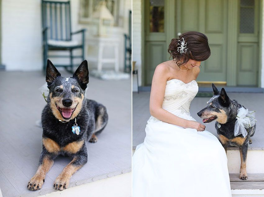 4-1-16-adorable-dogs-at-washington-weddings-12