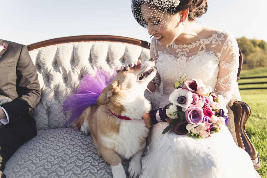 4-1-16-adorable-dogs-at-washington-weddings-13
