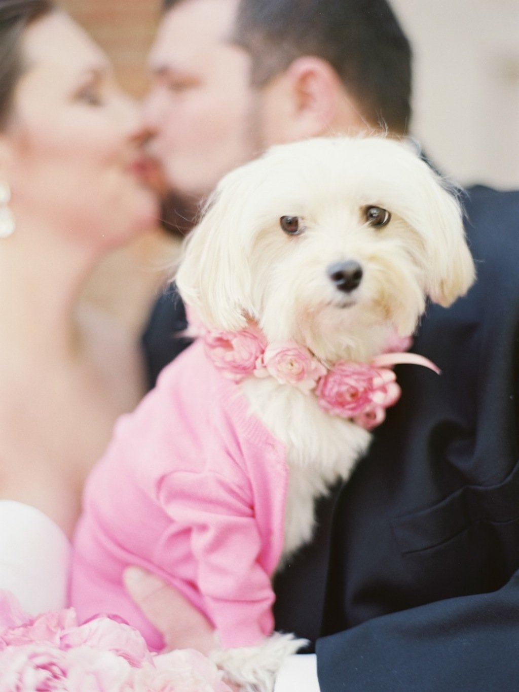 4-1-16-adorable-dogs-at-washington-weddings-9