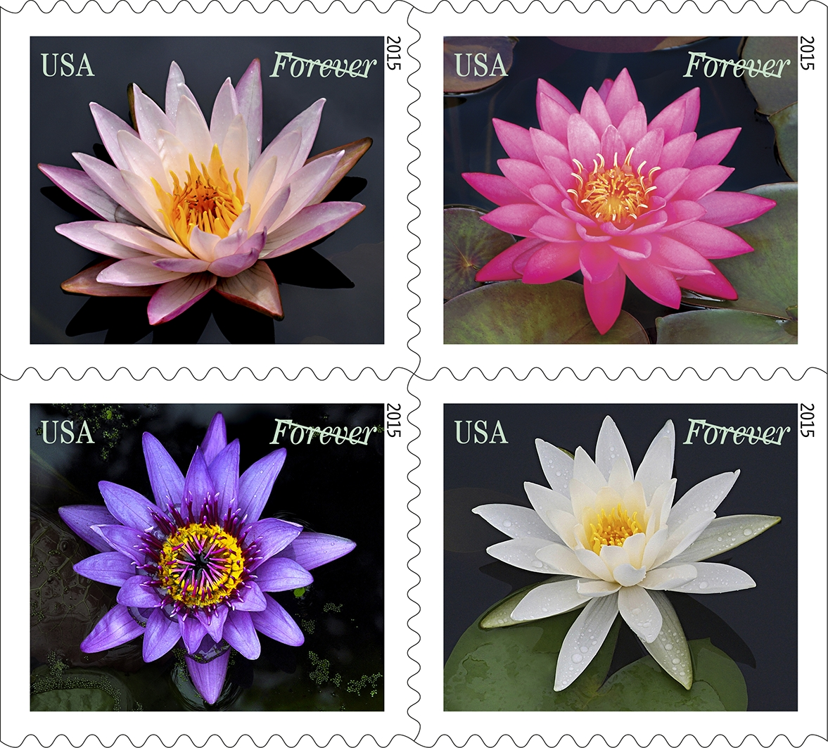 Dyer's water lily stamps. Photograph courtesy of Cindy Dyer.