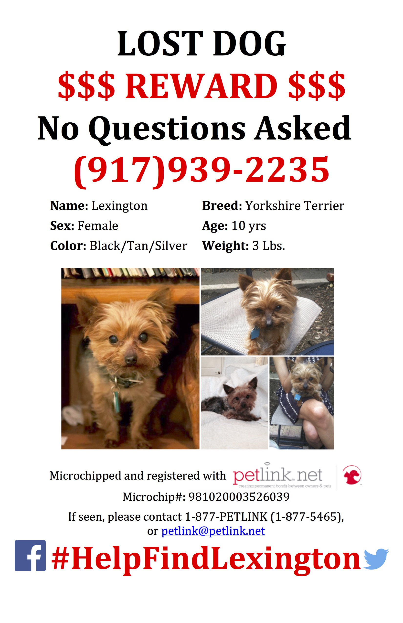 Lost Female 3 lb Yorkie Poster UPDATED